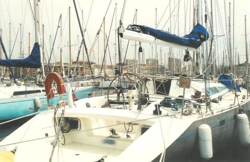 Levrier Des Mers